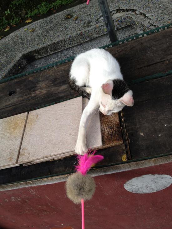 猫と猫のおもちゃ写真