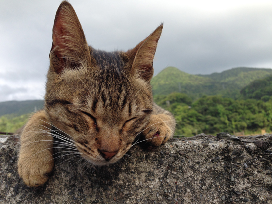 猫村の猫写真