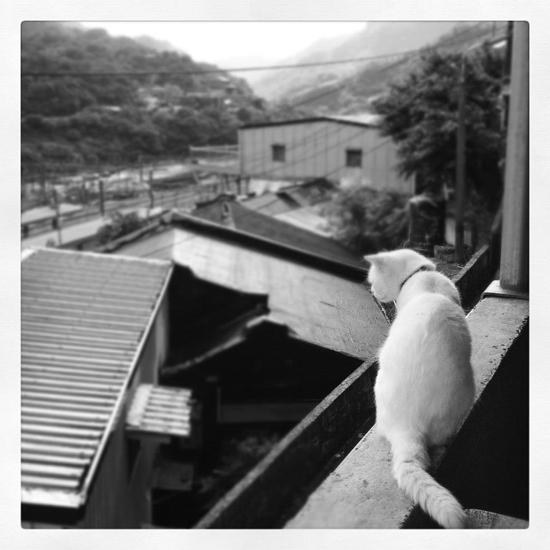 メインエリアにいた猫写真