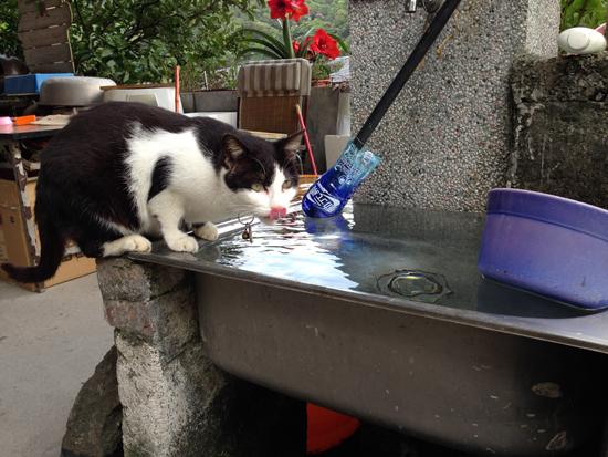メインエリアにいた猫写真2