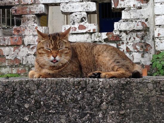 メインエリアにいた猫写真3
