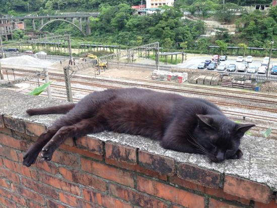 メインエリアにいた猫写真4