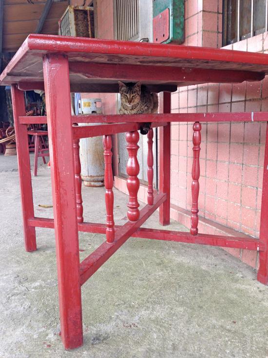 メインエリアにいた猫写真5