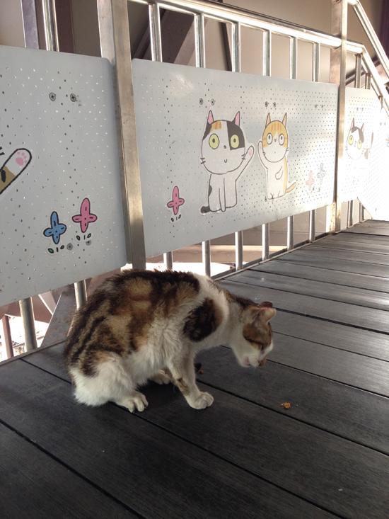 猫橋写真2