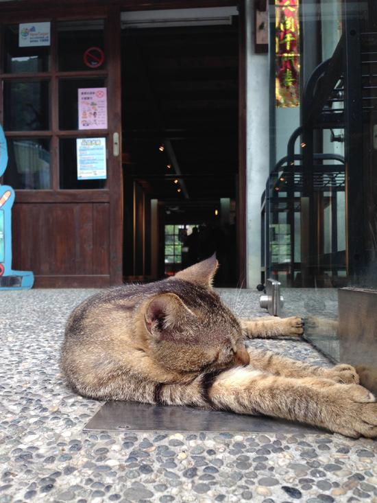 猫村珈琲写真2