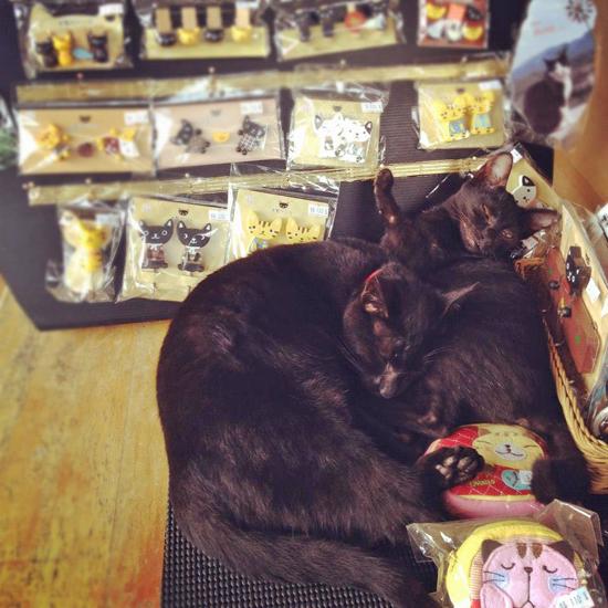店にいた猫の写真