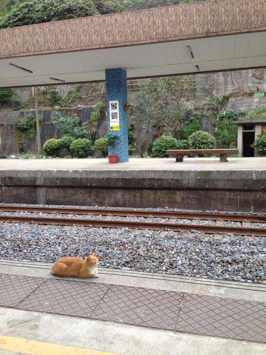 駅にいた猫の写真