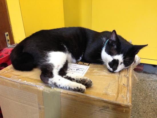 駅の売店にいた猫写真
