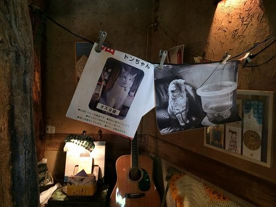 店内の猫とコーヒーの写真