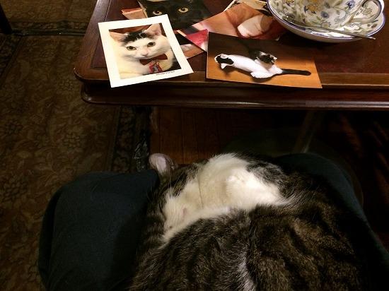 寝る石松くんの写真