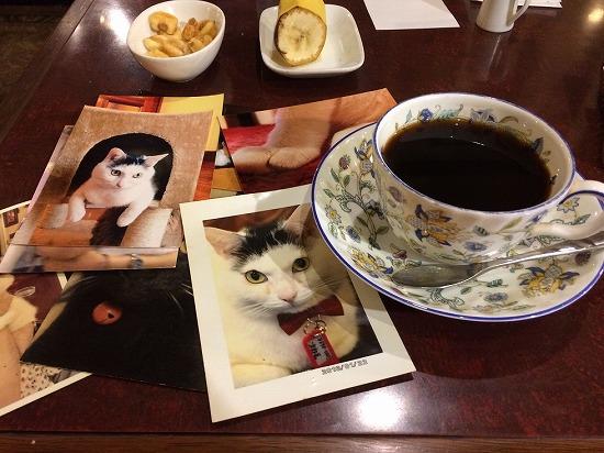 コーヒーと猫の写真