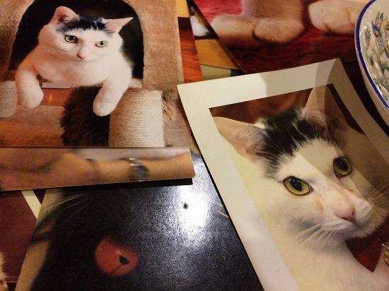 店内の猫の写真
