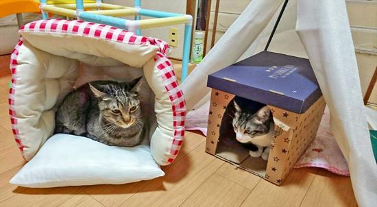 手作りベッドでくつろぐ猫の写真
