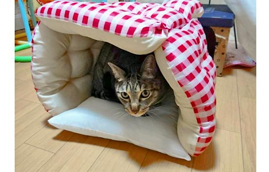 猫用ハウス型ベッドの作り方2