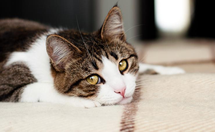 猫が悲しい時にみせる仕草5つ。実は悲しいという感情を持ってない?