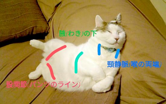 猫の冷やすといい身体の部分