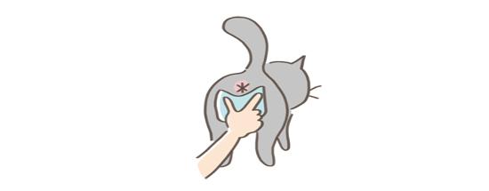 猫の匂い対処法、肛門絞りのイラスト