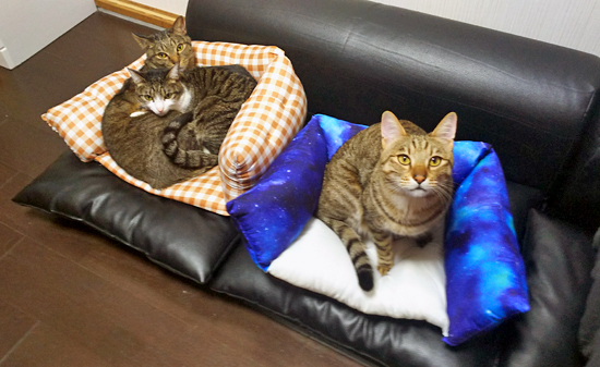 座布団の手作り猫ベッドの作り方10