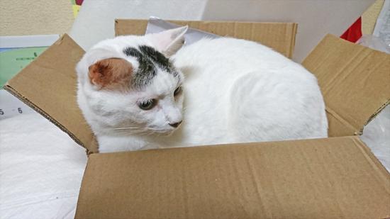 スプレー猫の写真