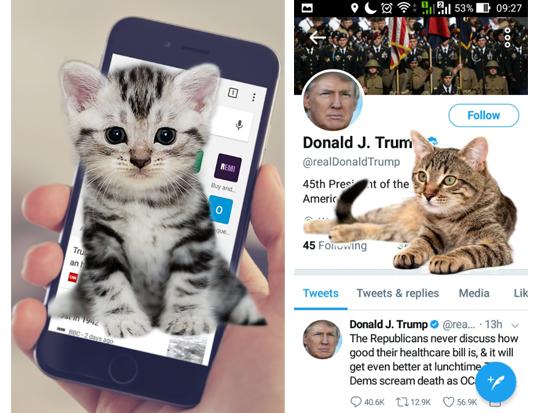 電話の中の猫画面
