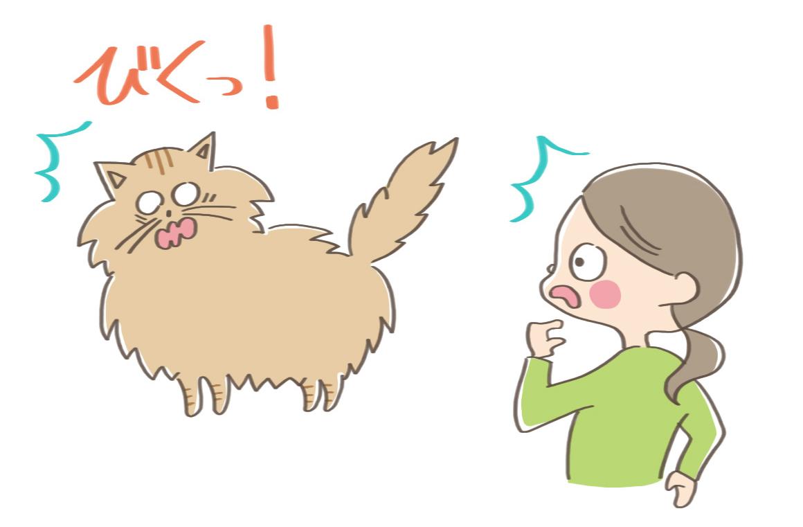 しっぽなど全身の毛を逆立たせる猫のイラスト