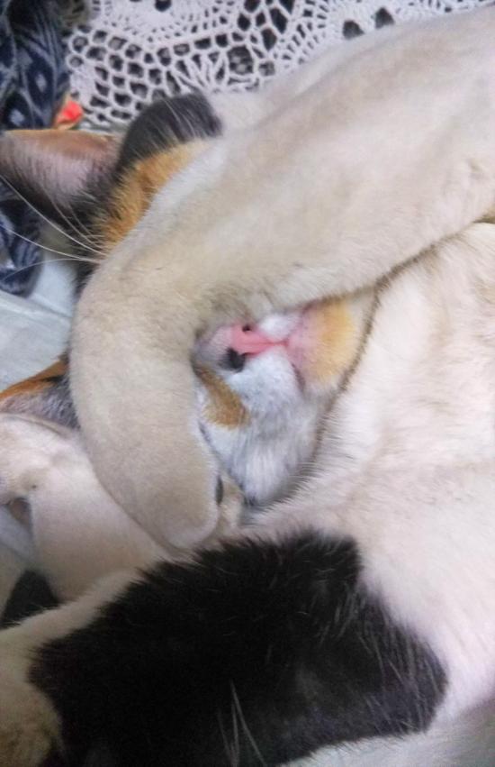 片目を隠す猫の写真