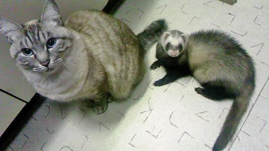 猫とフェレットの写真