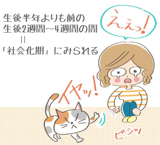 猫が人間に対して見せる反抗期は生後2週間から4週間のイラスト