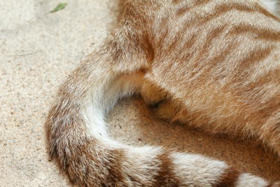 猫ふぐりの写真