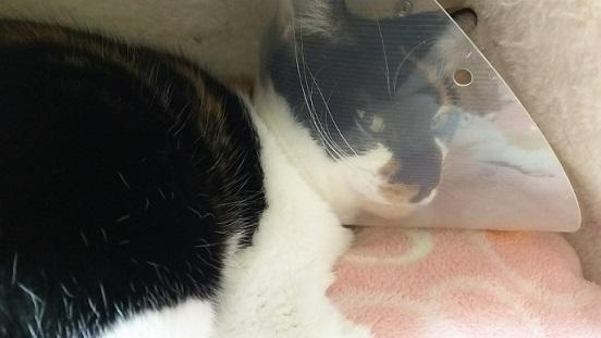 猫のプリンちゃんの写真