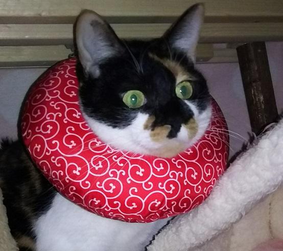 布製カラーをした猫写真