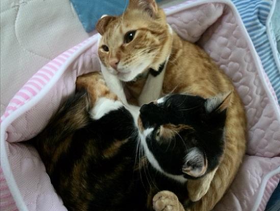 2匹の猫プリンちゃんともなかちゃんの写真
