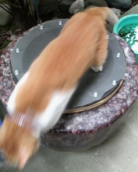 水瓶と猫の写真