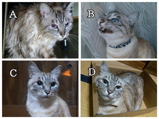 猫目クイズの答え