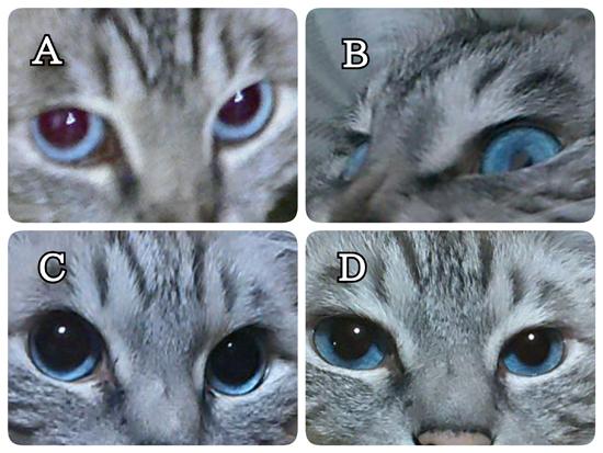 猫目クイズ