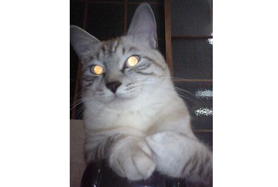 フラッシュで撮られた猫の写真