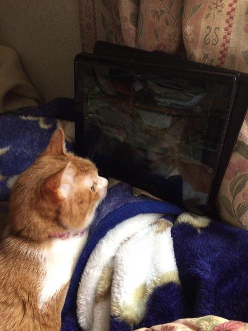 猫用ビデオを見る猫の写真2