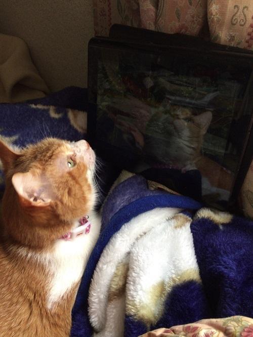 猫用ビデオを見る猫の写真3