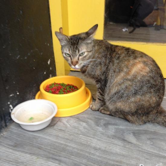 お店の入り口で出会った猫の写真1