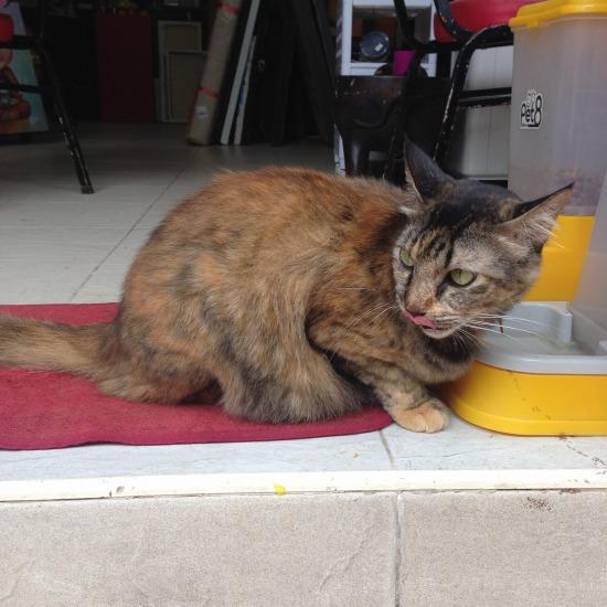 お店の入り口で出会った猫の写真