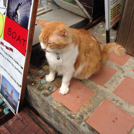 ボート屋さんの受付で客寄せをしていた猫の写真1