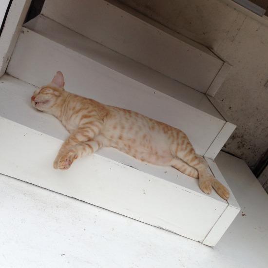 寝ている猫の写真1