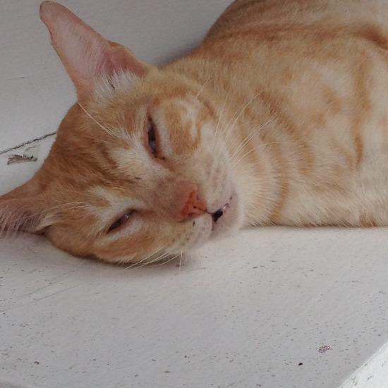 寝ている猫の写真2