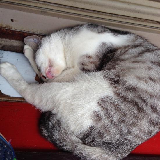 寝ている猫の写真3