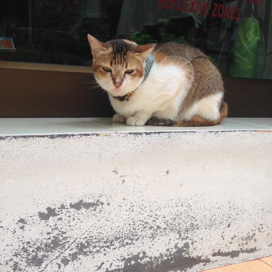 街で出会った猫の写真1
