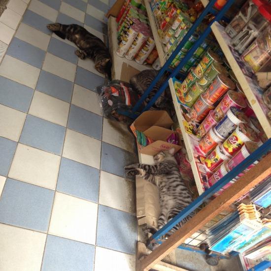 観光地で店番している猫の写真2