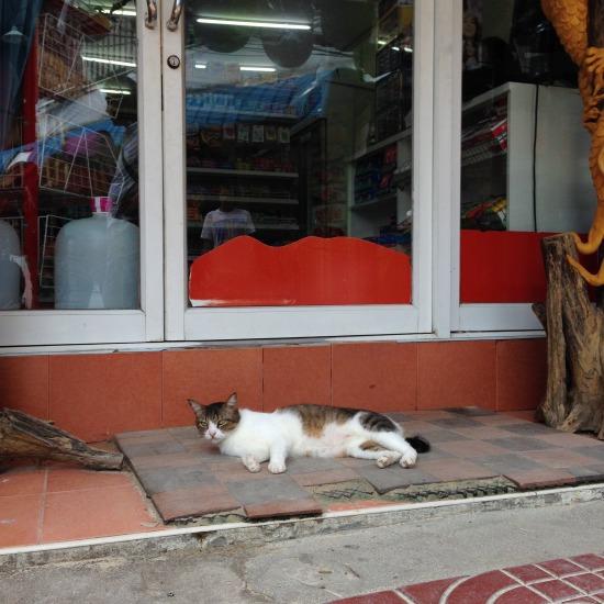 街でのんびりと過ごす猫の写真1