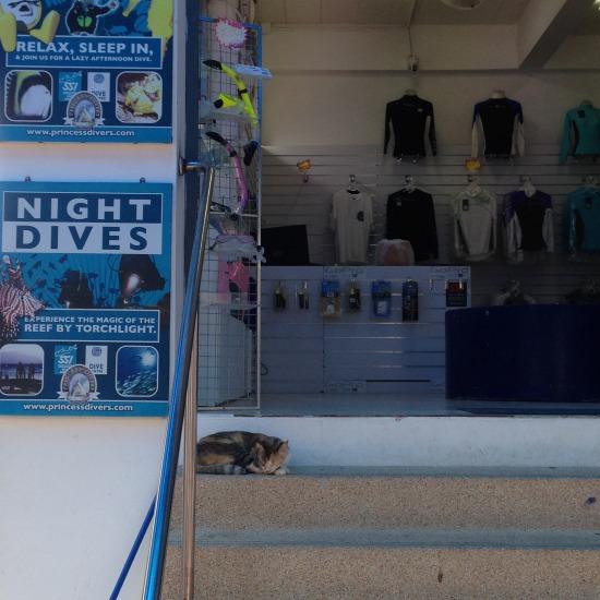 街でのんびりと過ごす猫の写真2