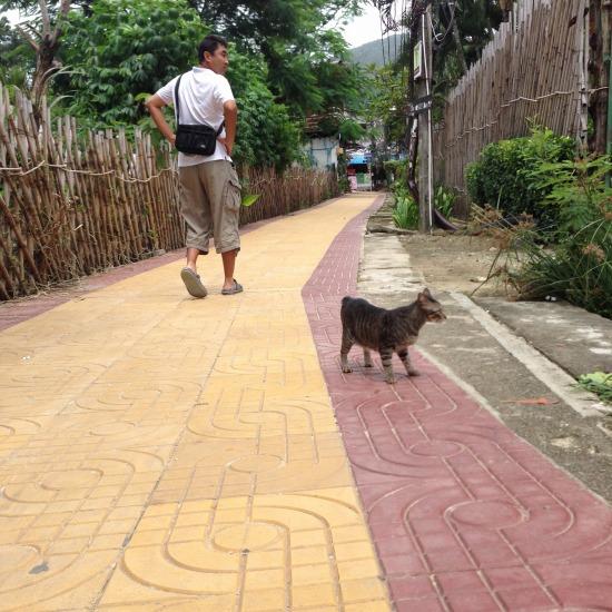 街でのんびりと過ごす猫の写真3