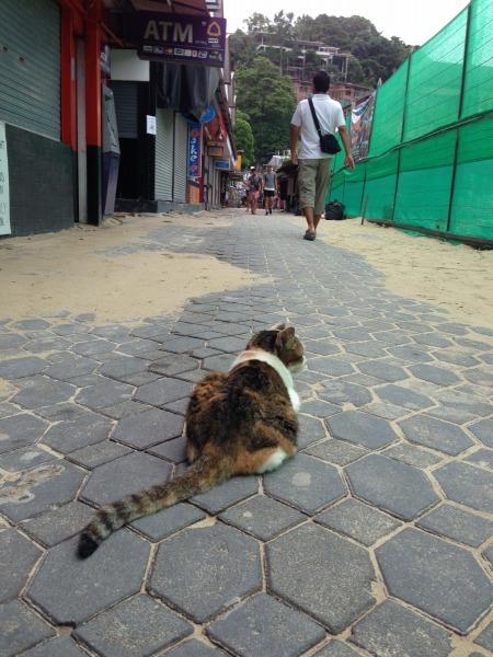 街でのんびりと過ごす猫の写真4
